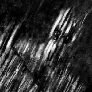 Antoine Aubin - 'Bois mort' - 21x29,7cm - Fusain - 2015