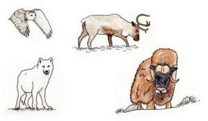 Illustration des animaux du Grand Nord